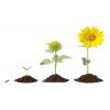 Alaptápok Virágzáshoz