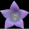 Virágzás Stimulátorok